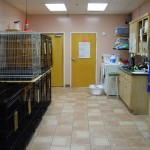 Kennel management area and boarding for pets with special needs